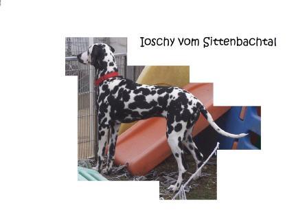 Ioschi vom Sittenbachtal